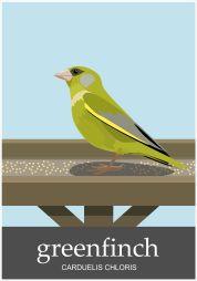 Greenfinch-1