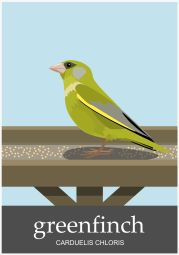 Greenfinch-1