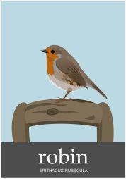 Robin-1