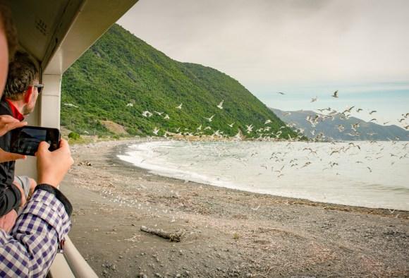 coastal pacific train New Zealand