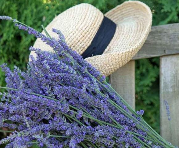 lavender, Avignon, france