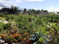 Creekside Community Garden 2012