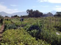 New Roots Farm