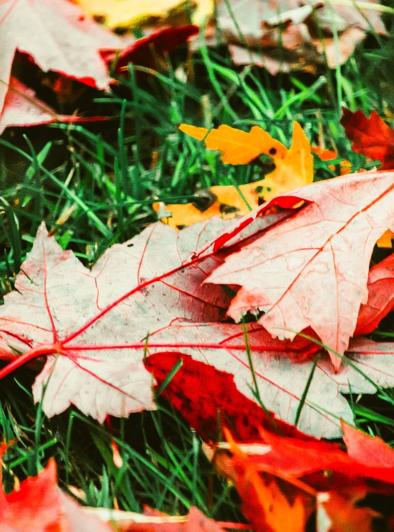 Autumn Gardening Tips You Might Want To Try