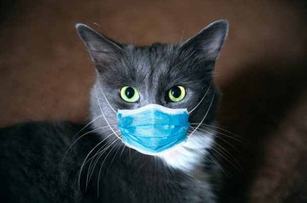 ПОЧЕМУ ОНИ ПРЕДУПРЕЖДАЮТ О «ВТОРОЙ ВОЛНЕ» COVID-19? Cat-with-coronavirus