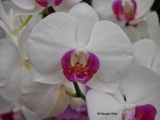 white orchid, Kew Gardens