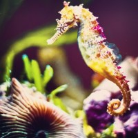 Feeling Animalistic dreaming of beautiful Rainbow Seahorses & Fireflies #water #seahorse #nature #animalistic #rainbow #colors #animal #malescangivebirthtoo