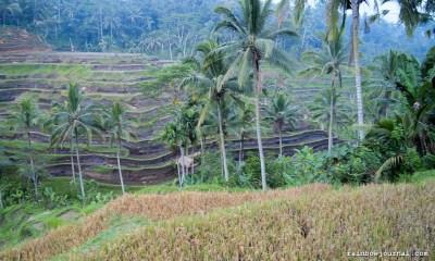 Bali Temple Run (2 of 2): Pura Ulun Danu Batur, Besakih and Rice Paddies