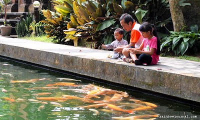 Upon entering this Bali temple, you are greeted by a wide pool filled with huge koi fish.