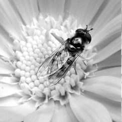 Fly in a flower