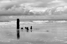 Week 42: Taken at Tywyn, Mid Wales. I love the sea and thought the posts in the sea added interest.