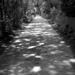Week 50: Another photograph from my trip to Boar's Hill. I am very fond of paths leading into the distance, especially ones dappled with sunlight.