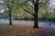 0406-autumnleaves