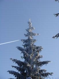 Die Bäume wachsen bis in den Himmel...