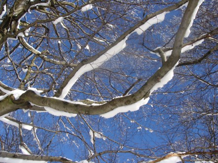 Der Schnee taut langsam auf und fällt runter. Das ist fast wie eine Schneeballschlacht... :) ...ich habe ordentlich was abbekommen... :D