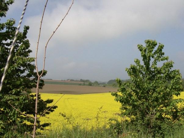 Blick vom Ithkopf auf die Felder