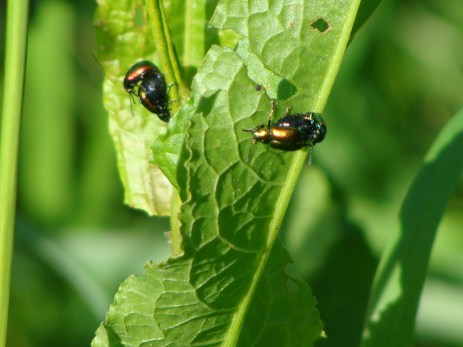 Und die sind dabei lauter neue kleine grüne Käferchen zu machen