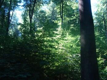 Ich liebe es, im Wald zu sein...