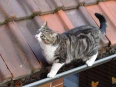 Penny balanciert auf der Dachrinne