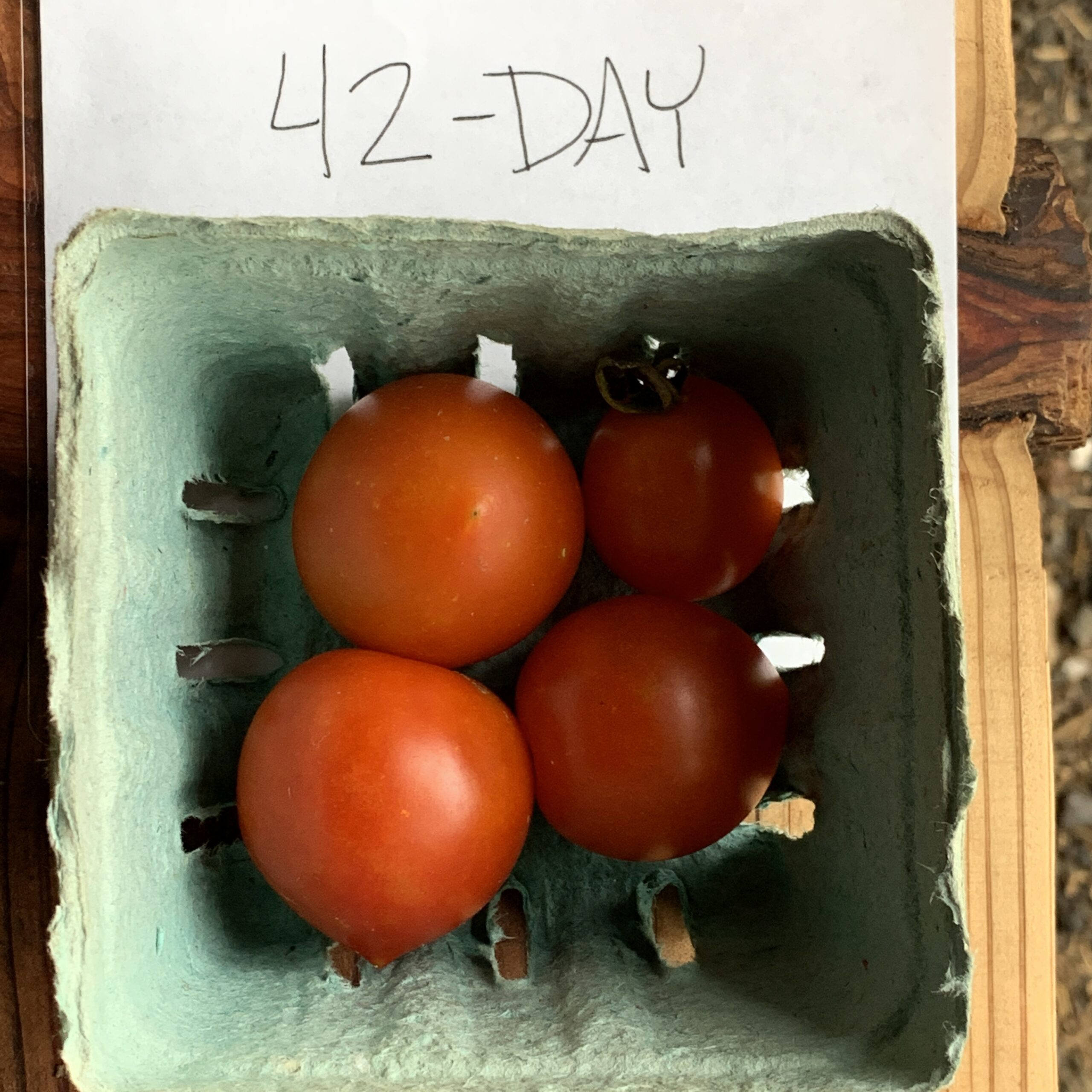 Image of 42-Day tomatoes