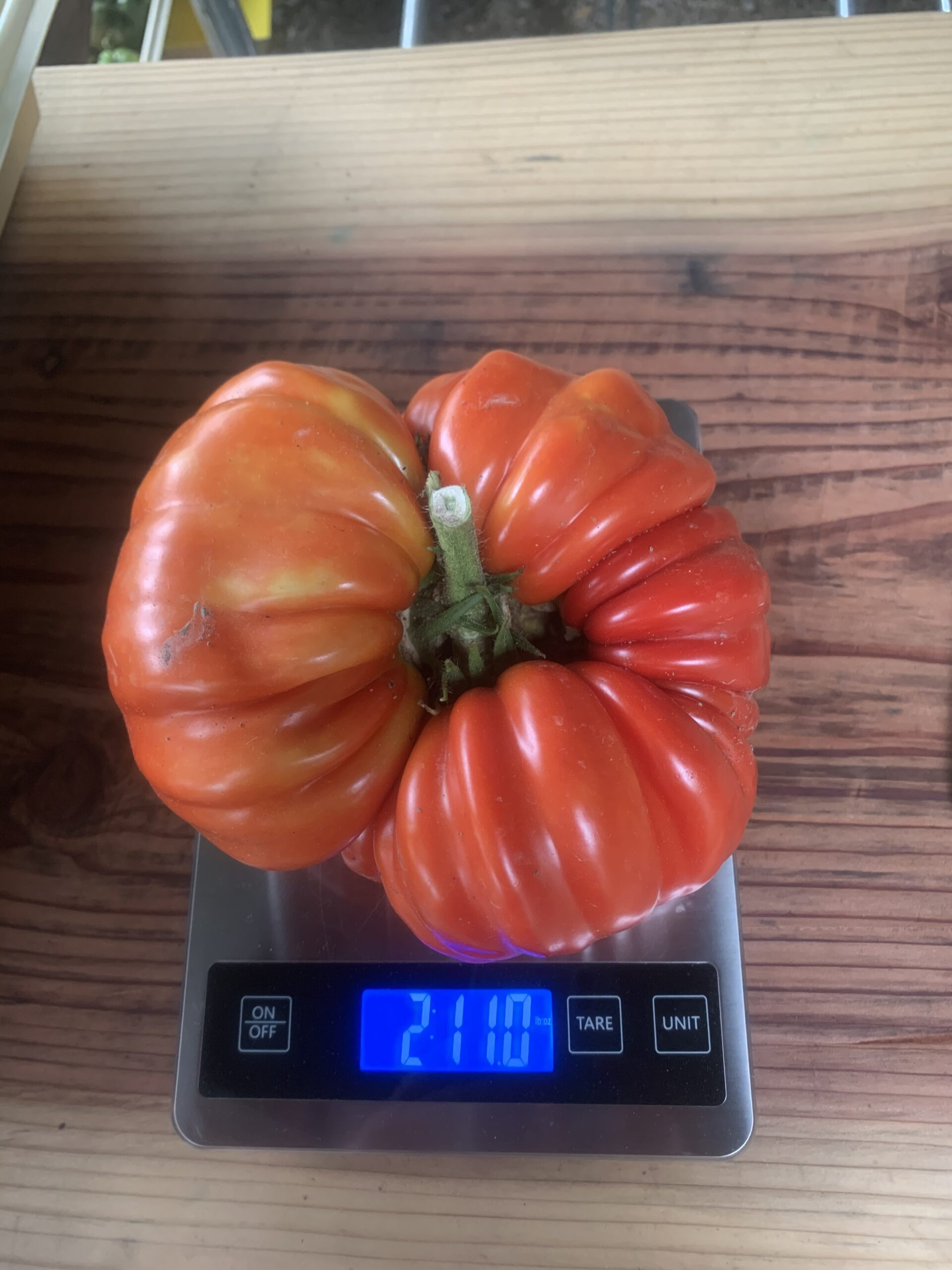 Image of a Rico de Parma tomato on a scale indicating a weight of two pounds eleven ounces.