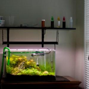 10 gallon rimless freshwater planted tank
