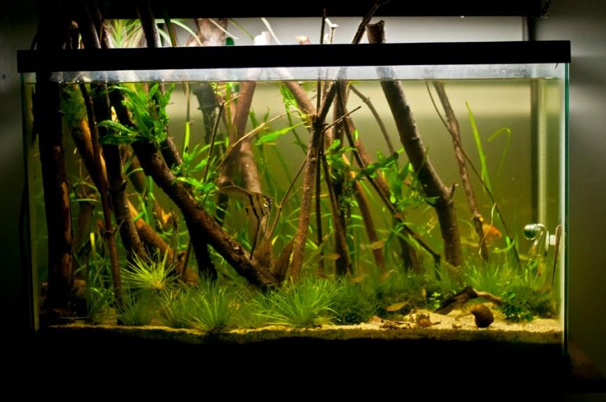 "29 gallon freshwater planted aquarium – ""Forests"""