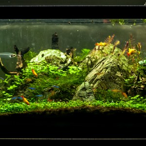Eruption – 20L Freshwater Planted Aquarium