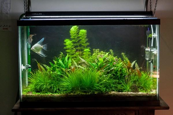 29 Gallon Freshwater Planted Angelfish Aquarium