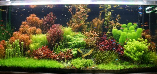 125 gallon dutch freshwater planted aquarium