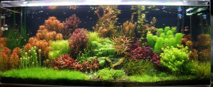 125 gallon dutch freshwater planted aquarium