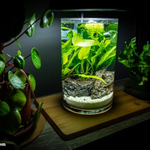 nano freshwater planted aquarium in a vase