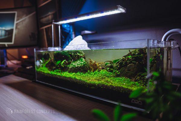 Shallow desktop freshwater planted aquarium