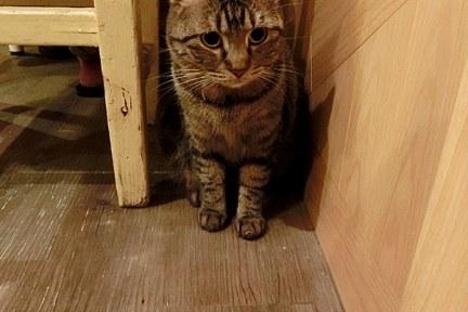 [高雄] 左營區 日光貓 Sunbeam Cat (原:弗拉薇夫人與貓) 寵物貓餐廳<3