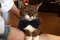腎胰貓咪飲食照護建議:腎貓、胰貓需求衝突,該怎麼吃!?