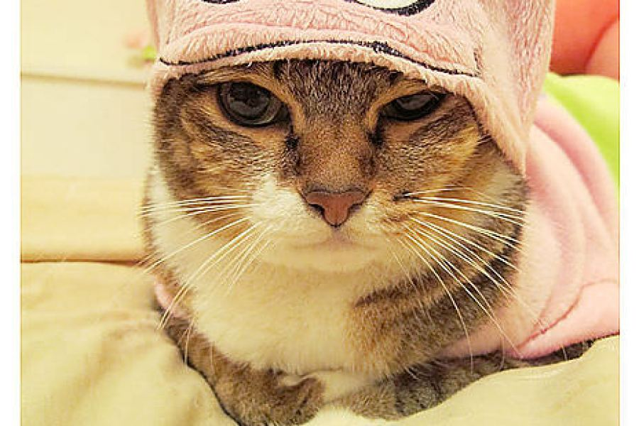 貓物║咪咪衣櫥之派大星穿搭派對
