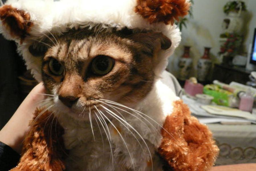 貓物║貴妃很表特之羊咩咩冬衣穿不下!!