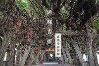 澎湖通樑古榕超壯觀!347年練就百條氣根樹網步道~盤根錯節的奇樹景觀!