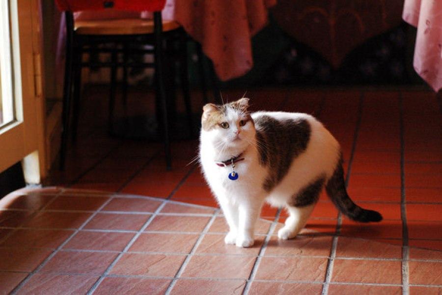 台北芝山 | 小貓花園寵物餐廳