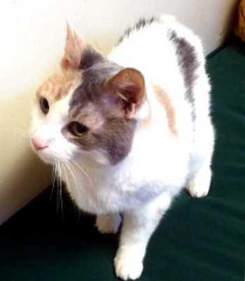 Senior Pet Wellness at Rainier Veterinary Hospital Seattle
