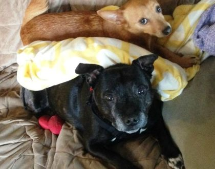 Rainier Veterinary Hospital Dog of the Month, August 2016: Archie and Charlotte