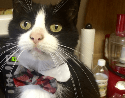 Rainier Veterinary Hospital Cat of the Month, May 2017: Rupert