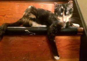 Rainier Animal Fund, Beauty's Treasure: Millie Today