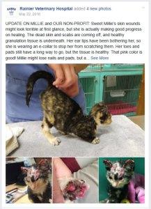 Rainier Animal Fund, Beauty's Treasure: Millie & Beauty's Journey on Facebook