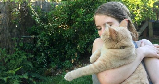 Rainier Veterinary Hospital Cat of the Month, November 2017: Juno