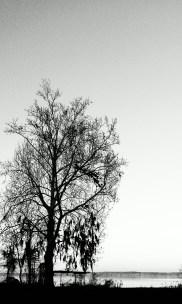 IMAG1675-1-1