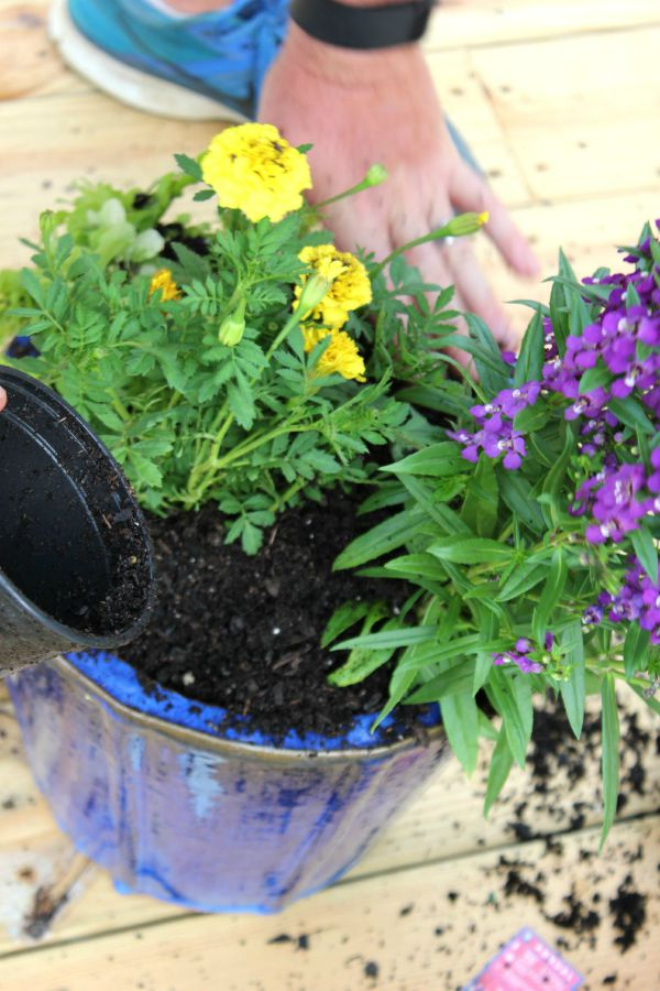 Tips & Tricks for the Perfect Container Garden