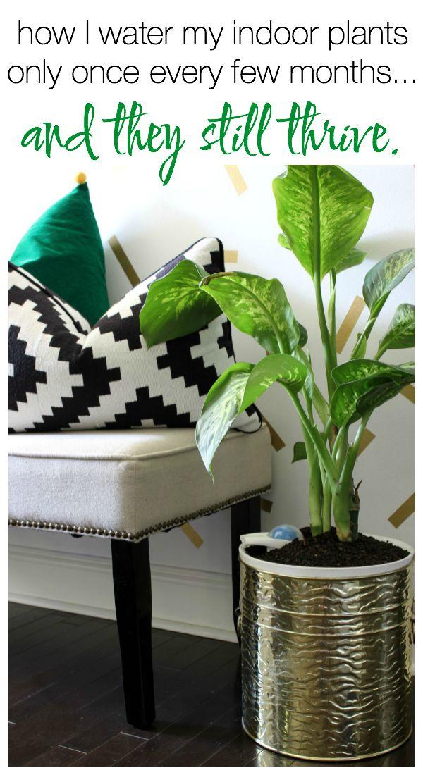 How to Grow Indoor Plants | When to Water Plants | Growing Plants Indoors