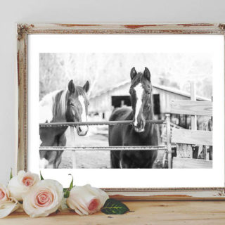 Horse Art - Two horses in barn lot. - Rain on a Tin Roof