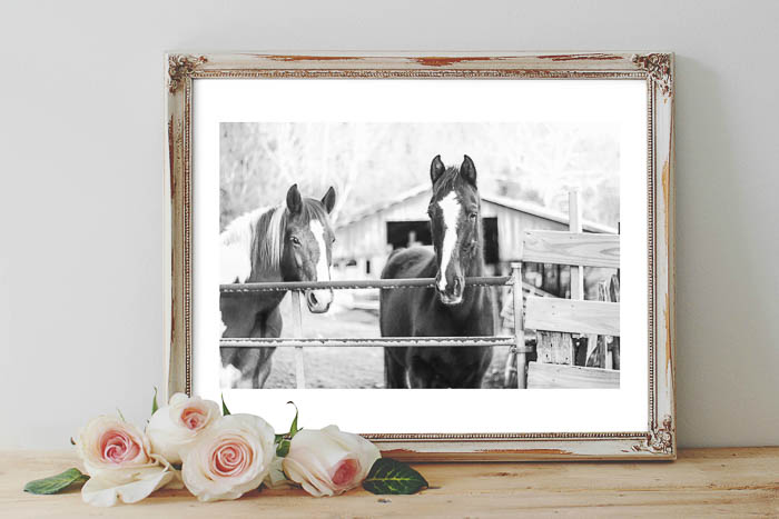 Printable Horse Wall Art - black and white horse pictures - Rain on a Tin Roof